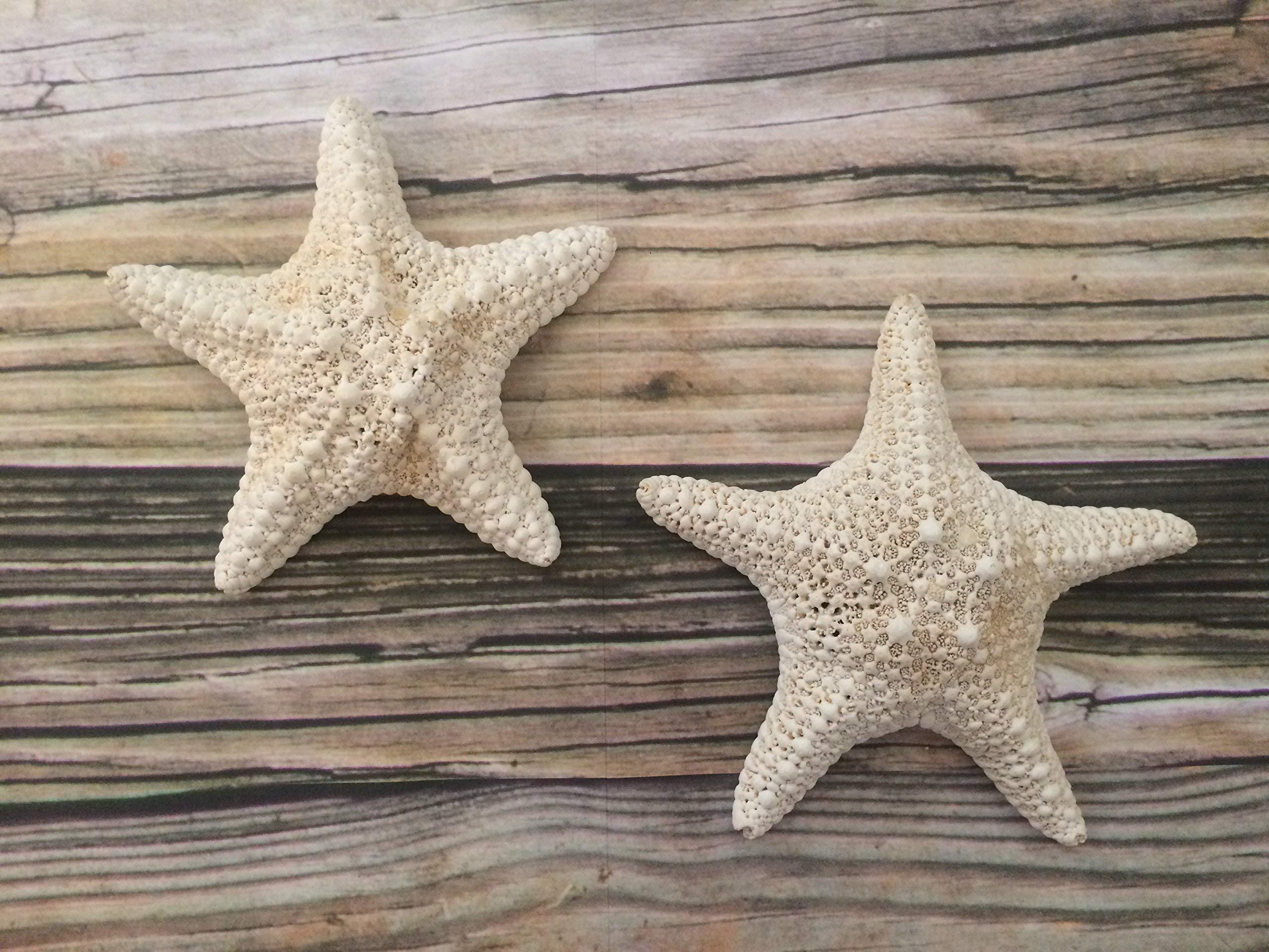 White Small Caribbean Starfish Wall Hangings, 2