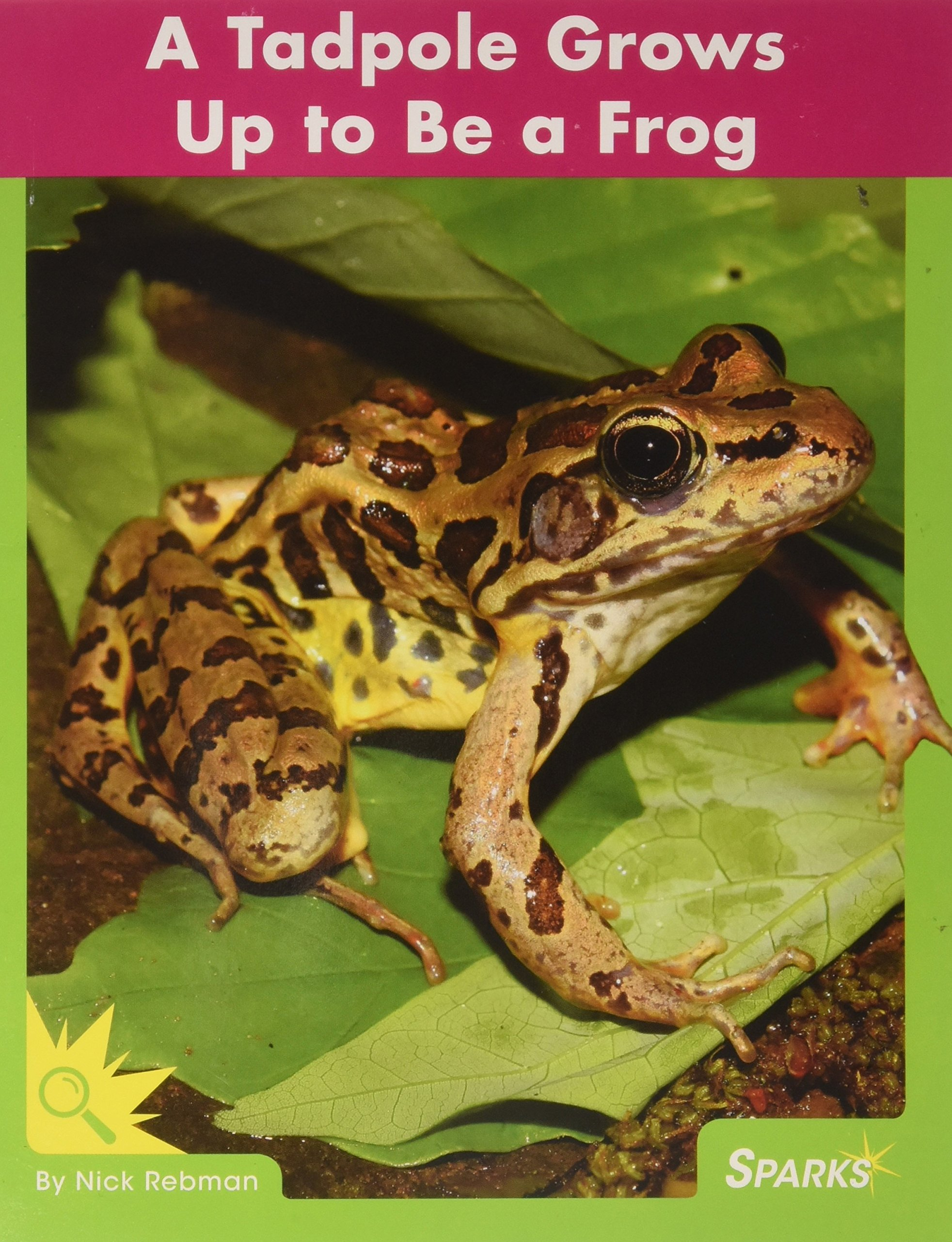 Download A Tadpole Grows Up to Be a Frog (Life Cycles: Science) pdf