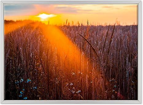 Quadro Moderno Tramonto su un campo di grano