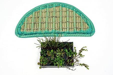 12 Pflanzen Teichbepflanzung Teich Koi Pflanzeninsel Set 80 cm halbrund inkl