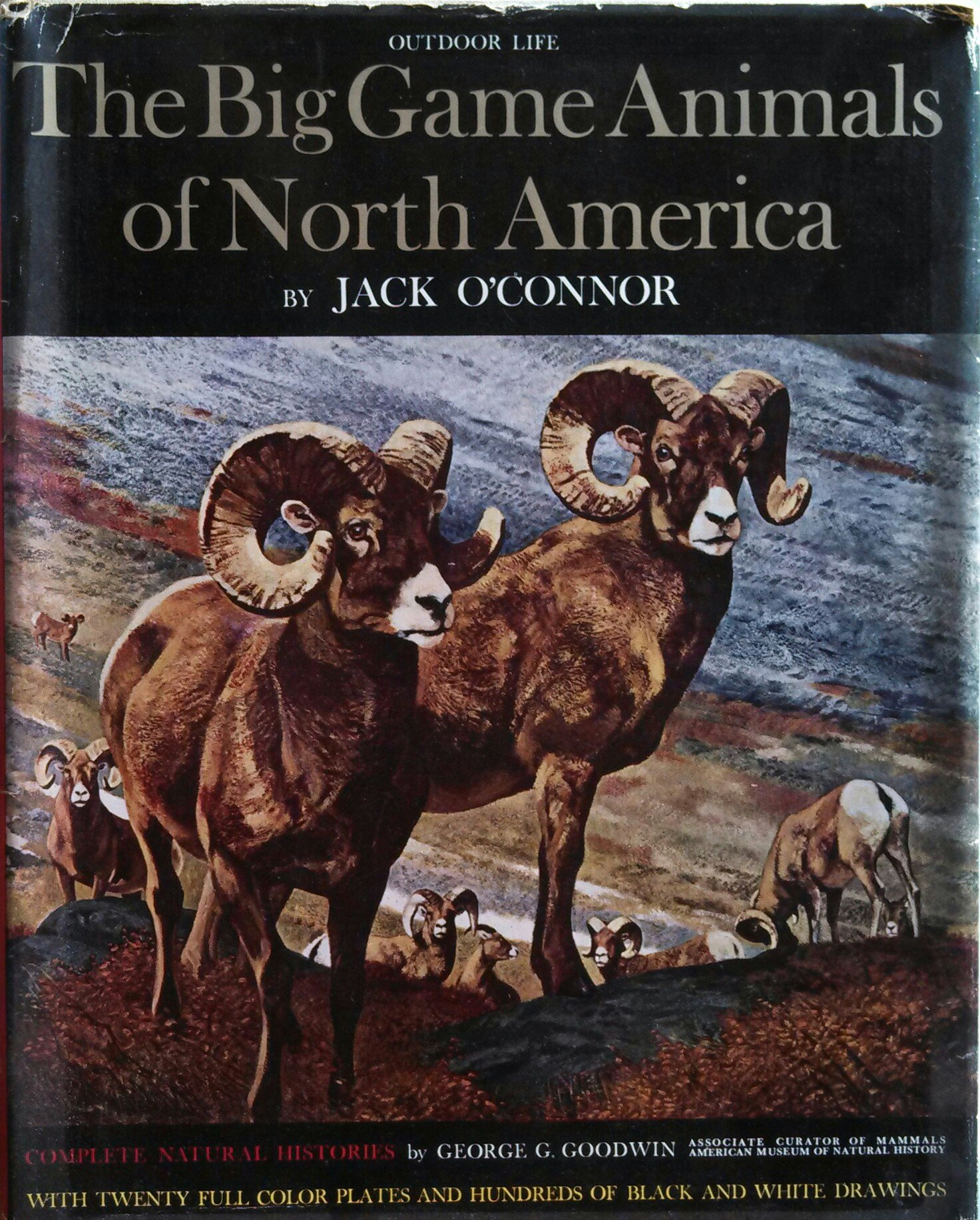 Image result for jack oconnor   big game animals of north america