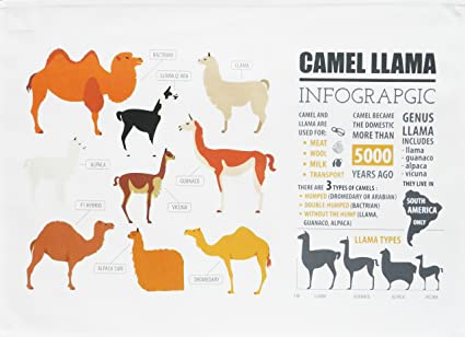 Camello y llama Infografía – grande de algodón toalla de té por la mitad de un