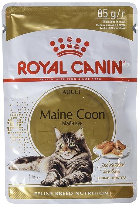 Royal Canin Cibo Umido Per Gatti Maine Coon Confezione Da 12 X 85