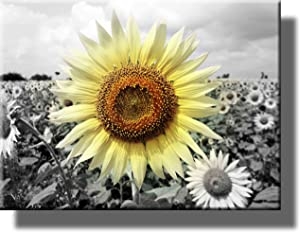 Big Sunflower on Farm Picture on Stretched Canvas, Wall Art Décor, Ready to Hang!