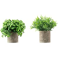 Casaluxe Potted Artificial Boxwood and Rosemary Plants, Set of 2 – Two-Toned Plastic Greenery in Cement-Coloured Paper…