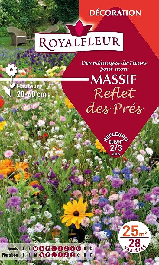Royalfleur PFRF08698 Graines de Mélange de Fleurs mon Massif Reflet ...