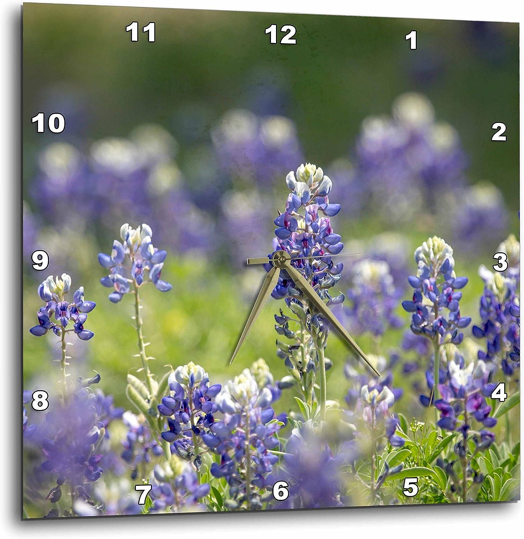 3dRose Texas Bluebonnets, Austin, Texas Wall Clock, 10 by 10