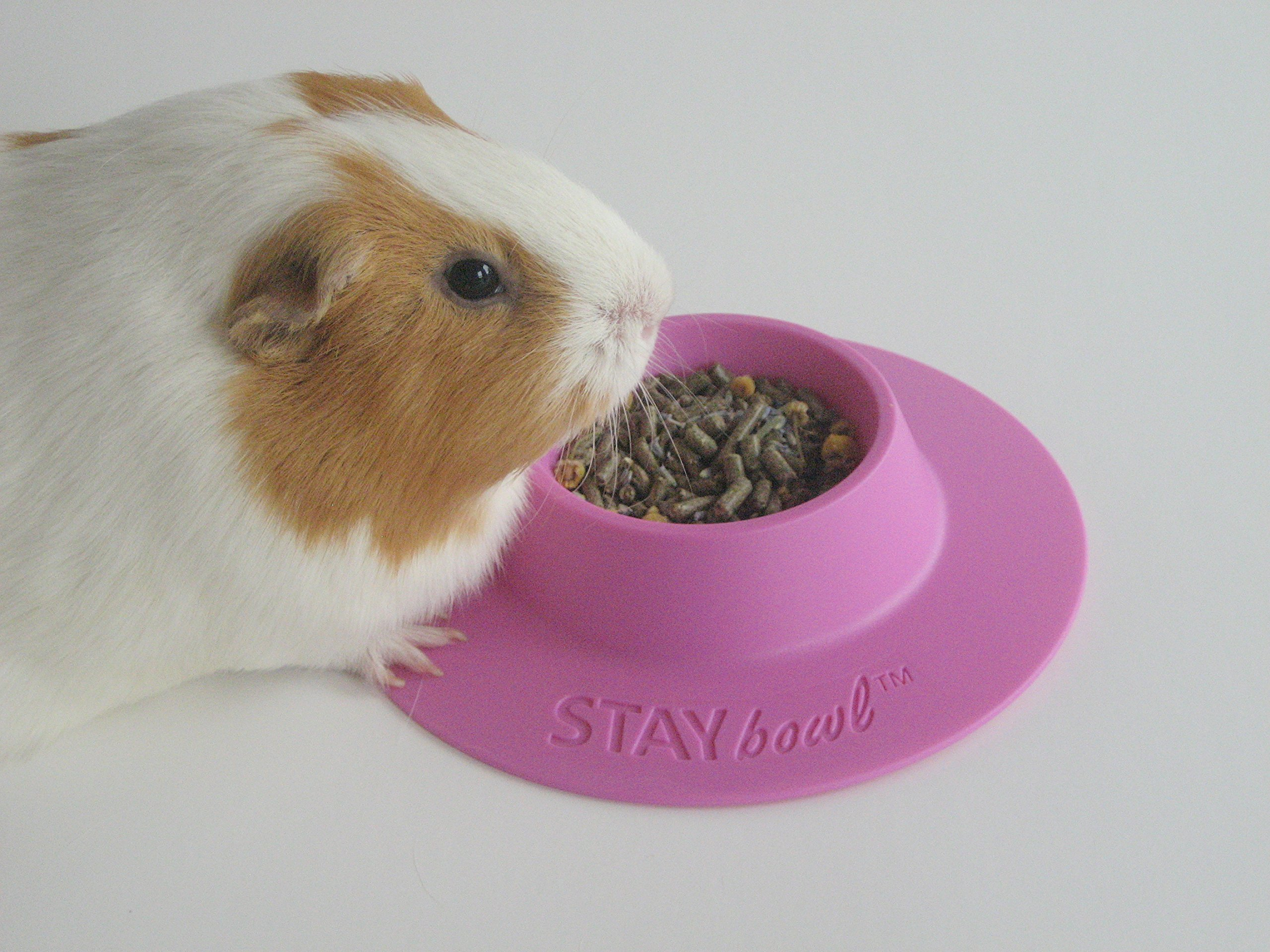 STAYbowl® Tip-Proof Ergonomic Pet Bowl for Guinea Pig and Other Small Pets, 1/4-Cup Small Size, Lilac (Purple)