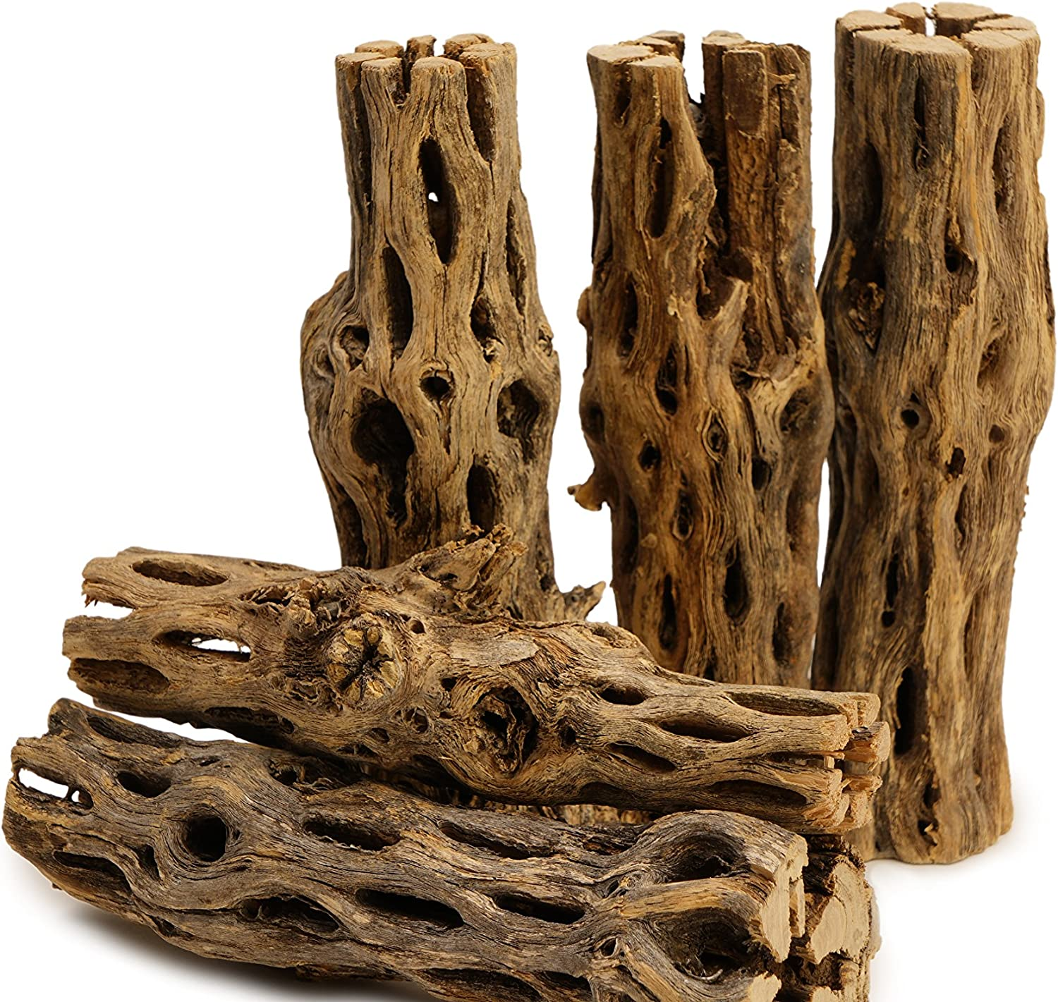 NApremium Natural Cholla Wood | 5 Pieces of 5-6