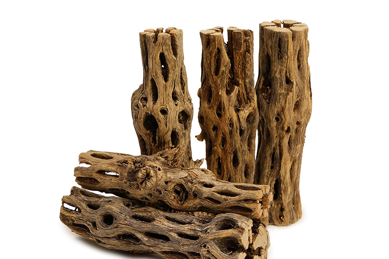 "5 Pieces 5-6"" Long Natural Cholla Wood for Aquarium Decoration by NilocG Aquatics"