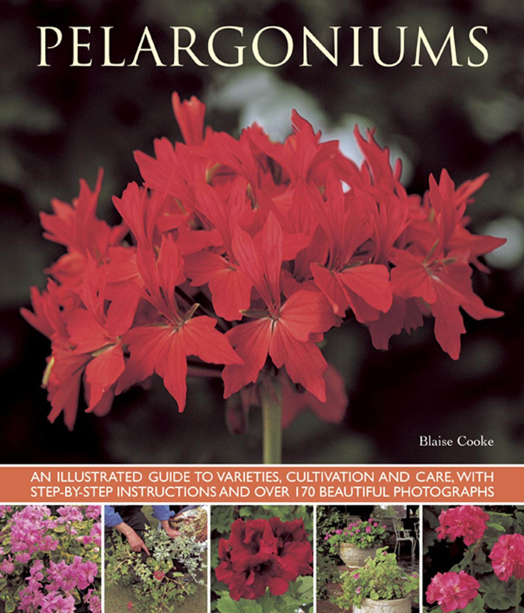 Pelargoniums An Illustrated Guide To Varieties Cultivation And