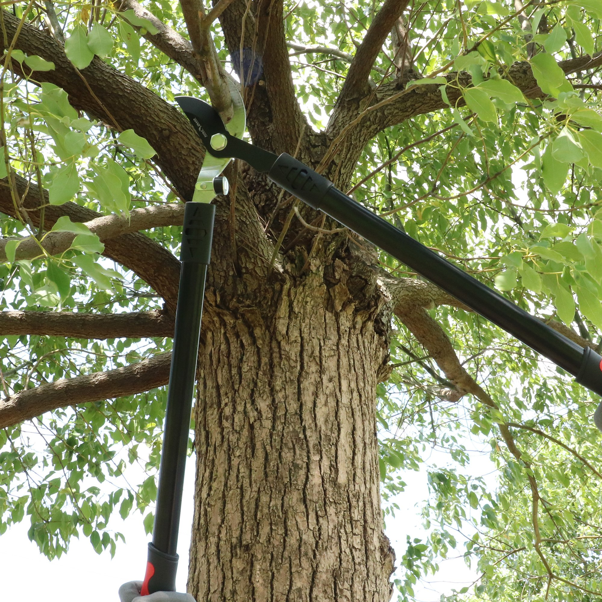 FLORA GUARD 27.5-inch Bypass Lopper, Makes Clean Professional Cuts, 1.25-Inch Cutting Capacity, Tree Trimmer and Branch Cutter Featuring Sturdy by FLORA GUARD (Image #7)