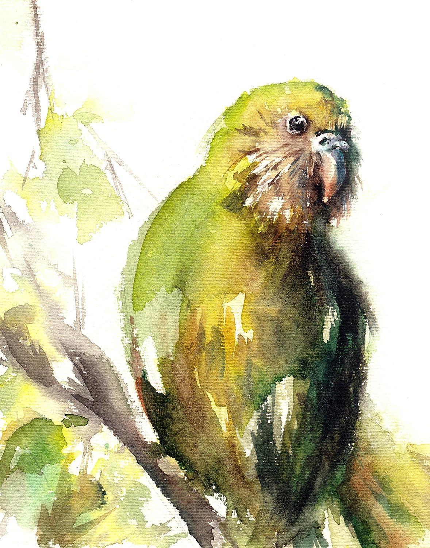 Amazon.com: Bird art print, parrot art, wall art print, watercolor ...