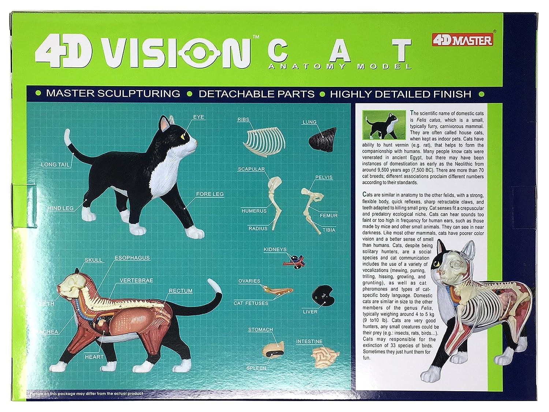 Amazon.com: 4D Vision Cat Anatomy Model: Toys & Games