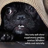 Veterinary Formula Clinical Care Premium Dog