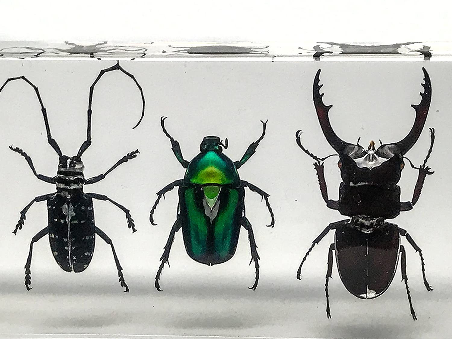 4 Beetles Collection in Lucit 352,4 g