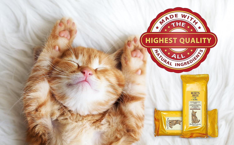 Burts Bees Dander - Toallitas de Limpieza para Gatos, 50 toallitas: Amazon.es: Productos para mascotas