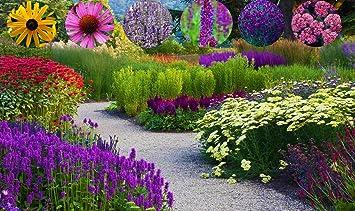 Immer Blühender Garten immerblühender winterharter schmetterlings staudengarten big set 6