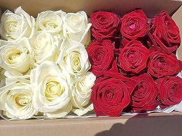 Je 9 Weisse U Rote Echte Rosenkopfe Fur Romantische Deko
