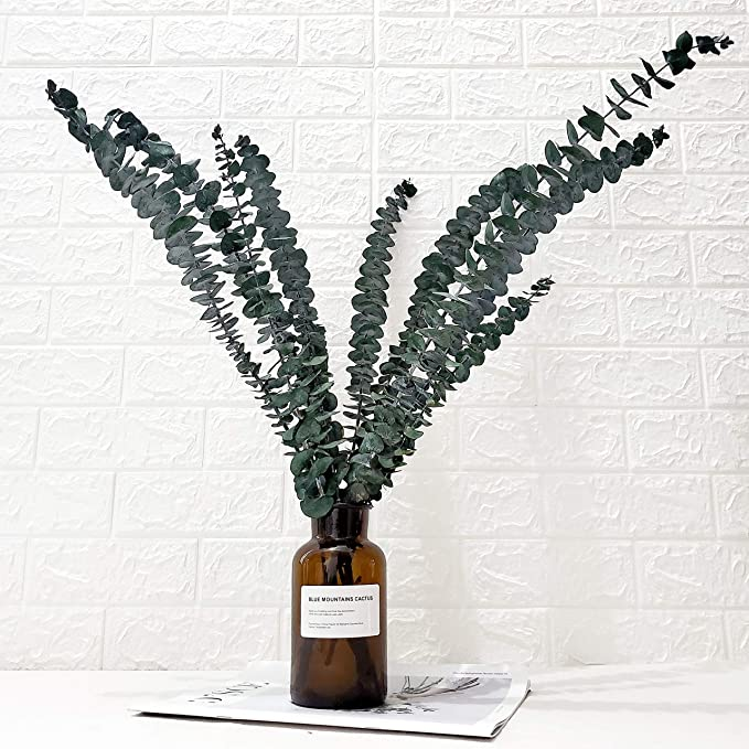 1pc Natural Dried Eucalyptus Branches Eternal Leaves Plants Arrangement Decor