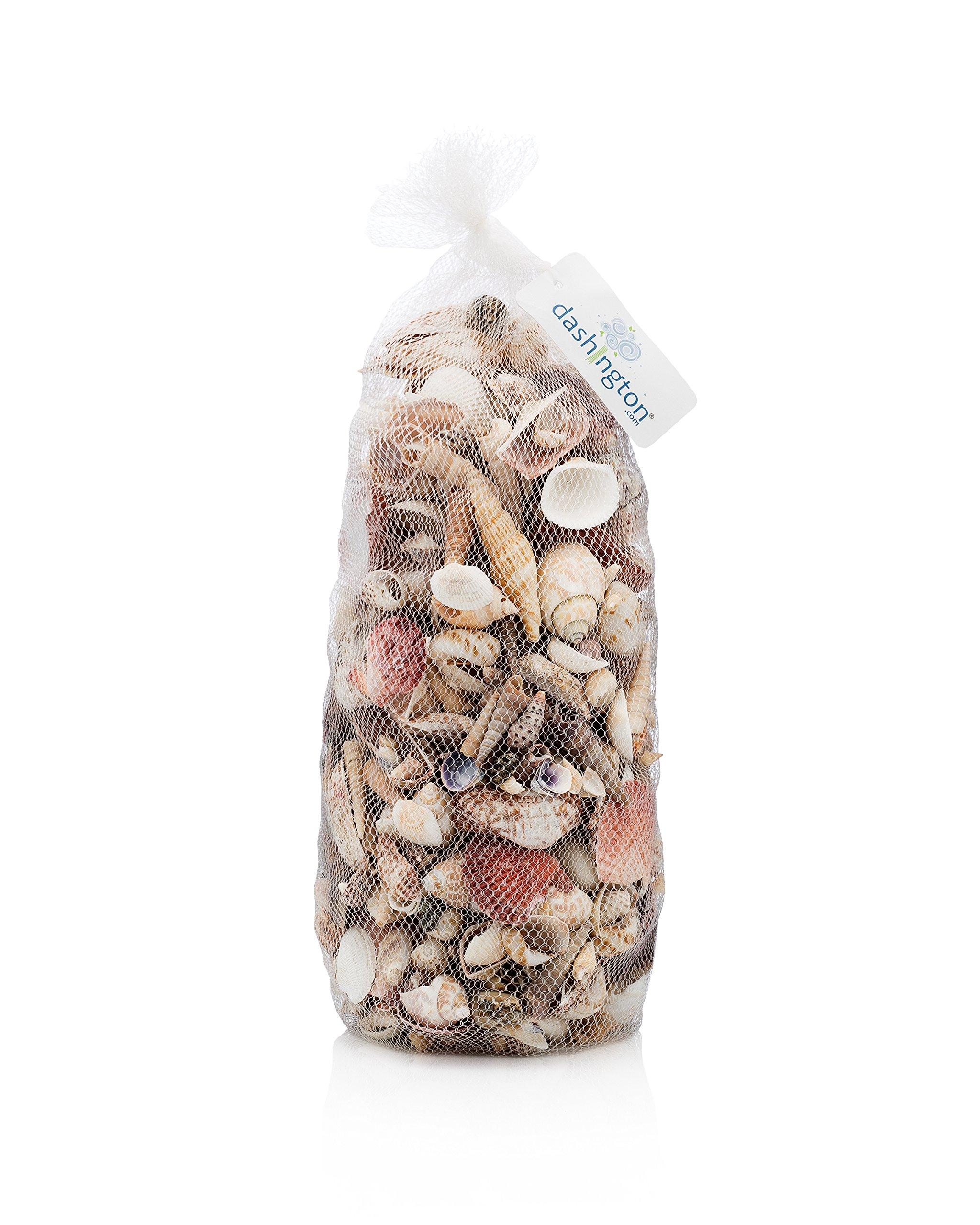 Dashington Assorted Beach Sea Shells, Large Sizes 1''-2'', 5lb Bag (400-500 Shells) by Dashington