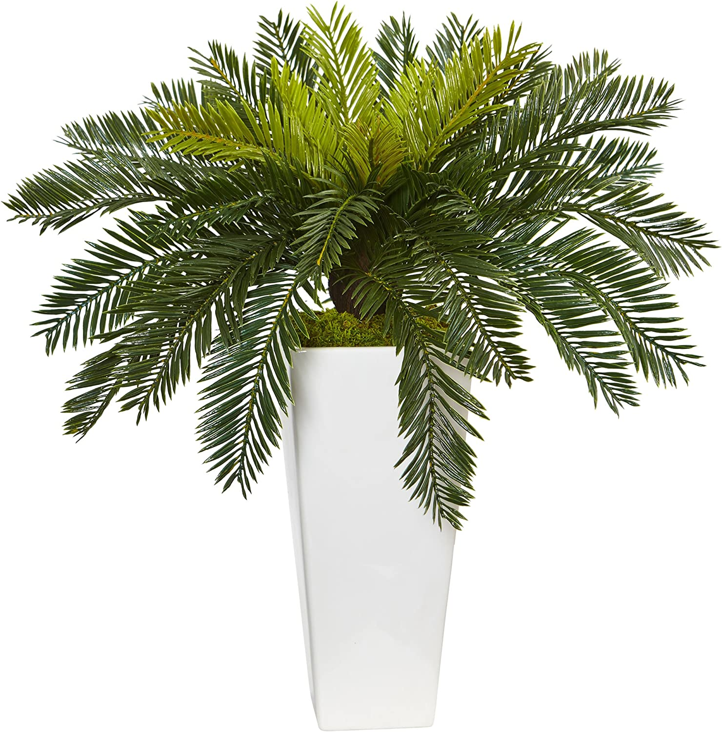 Artificial Cycas plant