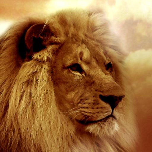 Lion Picture Roar (Lion Wallpapers)