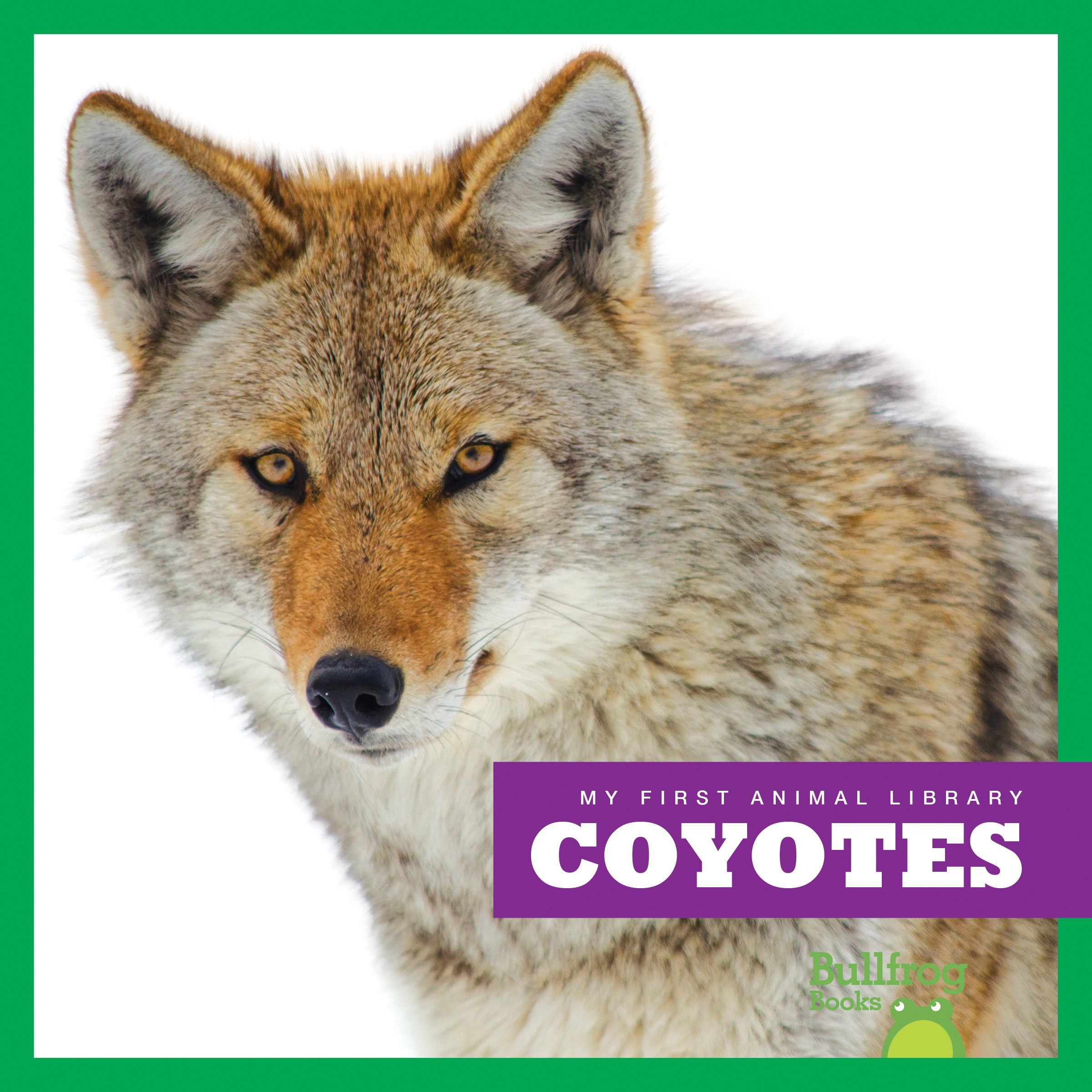 Coyotes (Bullfrog Books: My First Animal Library)