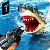 Shark Sniping 2017