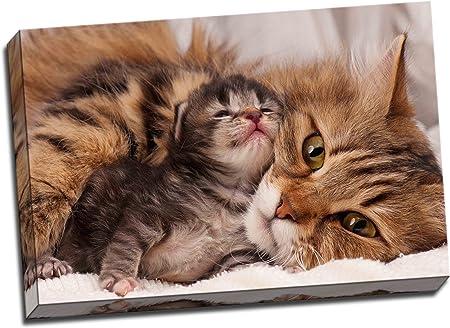 Chat Mignon Avec Chaton Sur Toile Art Print Poster 76 2 X 50 8 Cm