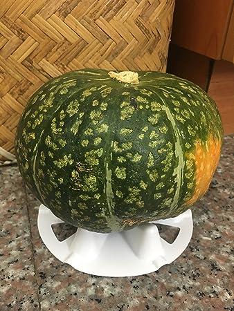 KYC - Soporte de plástico de melón y squash, cuna proectiva, evita ...
