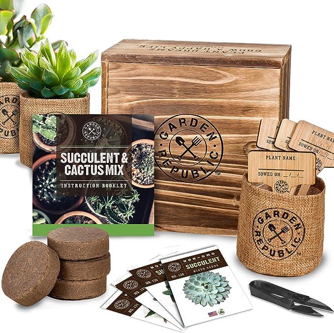 Amazon.com: Kit de iniciación de semillas suculentas de ...