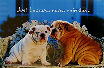 Just Because Were Wrinkled Cute Funny Happy Birthday Greeting Card W Bulldogs