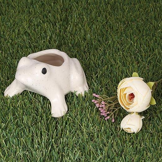 Macetas en miniatura de cerámica con diseño de rana blanca, para decoración del hogar, oficina, jardín, exterior e interior: Amazon.es: Jardín