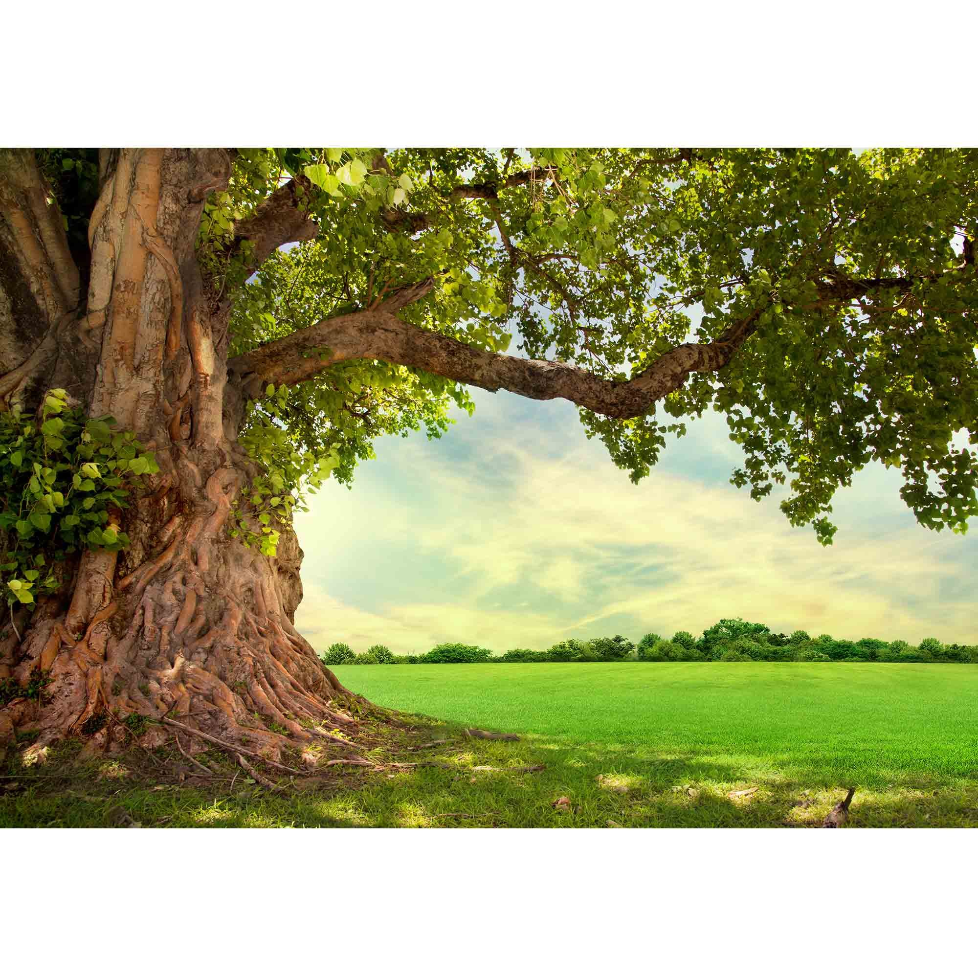wall26 - Spring Meadow with Big Tree with Fresh Green Leaves - Removable Wall Mural | Self-Adhesive Large Wallpaper - 100x144 inches by wall26 (Image #2)