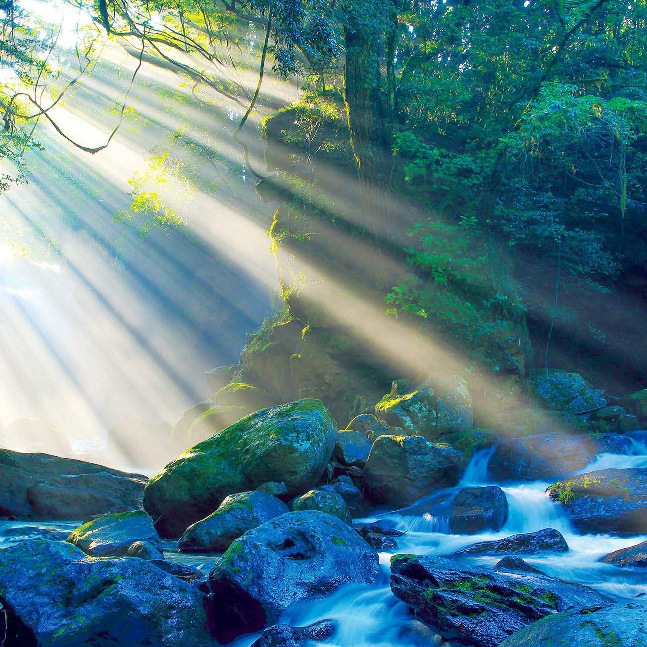 森 Ipad壁紙 渓谷に差し込む光が 夫婦滝からの清流を神秘的な情景に