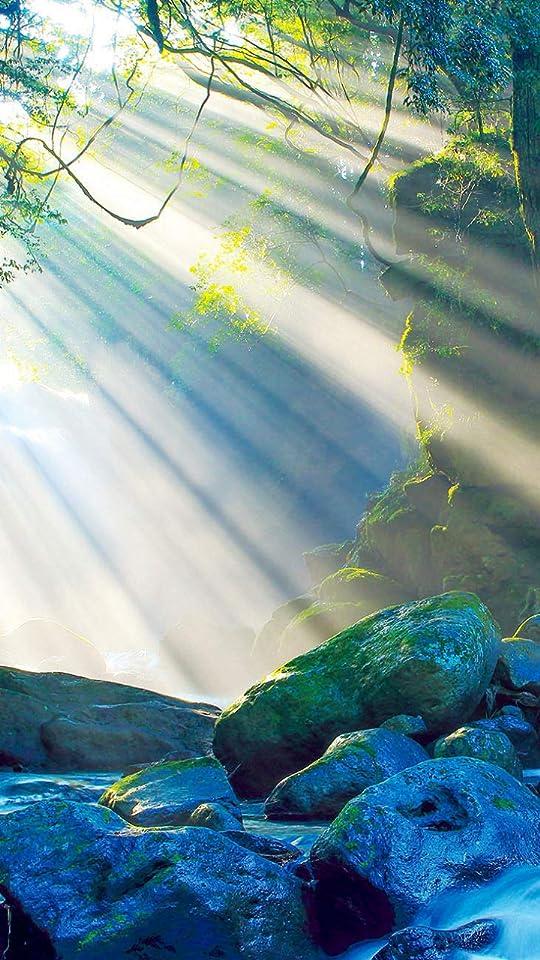 森 渓谷に差し込む光が、夫婦滝からの清流を神秘的な情景に変える QHD(540×960)壁紙画像