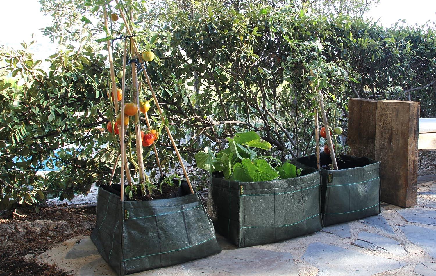 Minihuerto hortalizas V454530: Amazon.es: Jardín