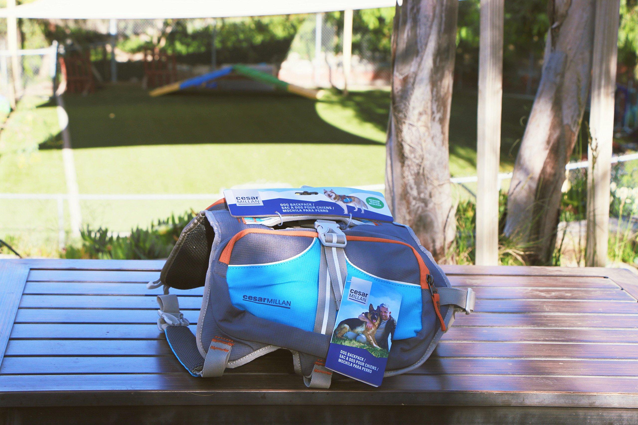 Cesar Millan Dog Backpack Large Blue
