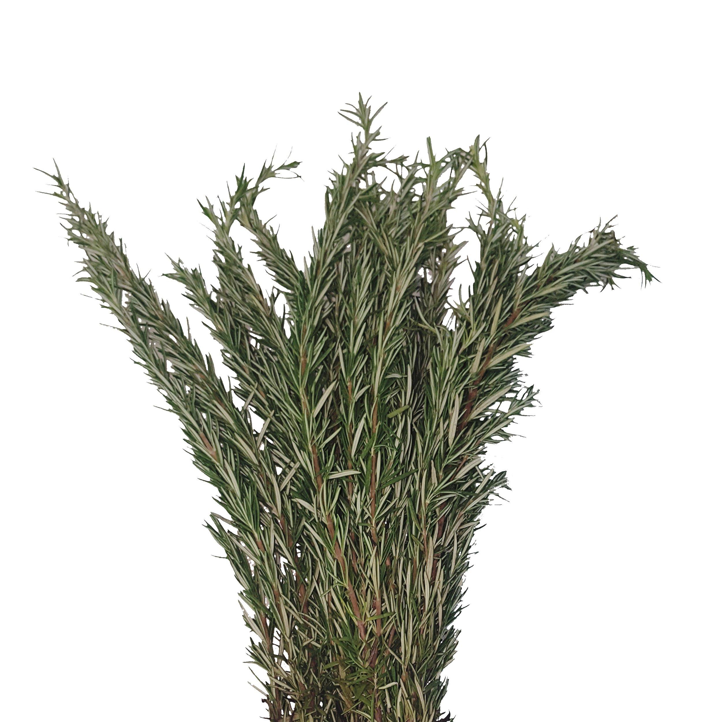 Farm Fresh Natural Rosemary - Pack 100