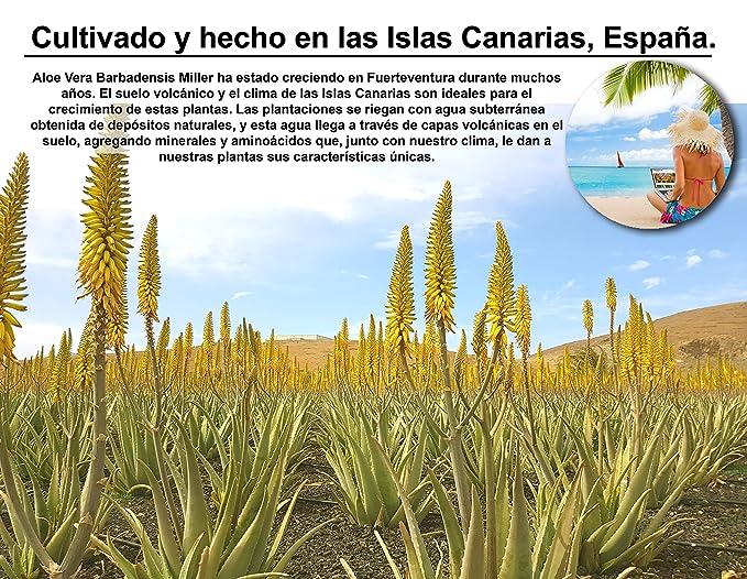 fuerte ALOE Aloe Vera Gel 100% Organico puro- 500 ml / 16.9 fl oz: Amazon.es: Belleza
