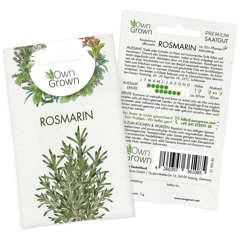 1500 Samen Pfefferminze Pflanze Gewürz