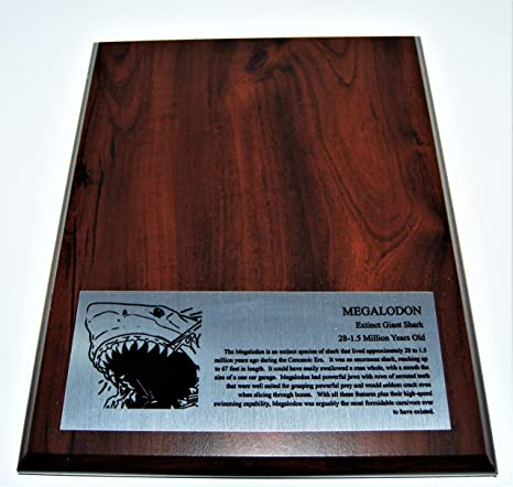 amazon com megalodon tooth display stand for fossil shark tooth