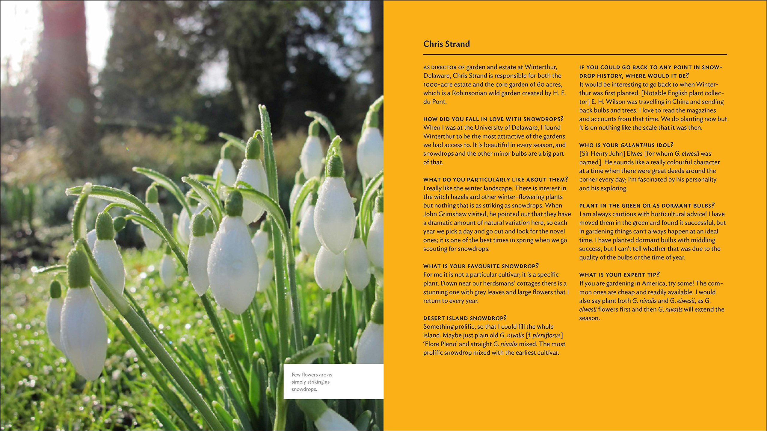 The Plant Lovers Guide To Snowdrops The Plant Lovers Guides