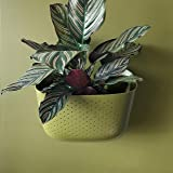 WallyGro Vertical Garden Living Wall Planter 4 Pack Olive