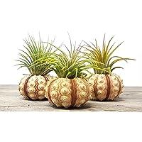 Amazon Best Sellers Best Garden Planter Urns