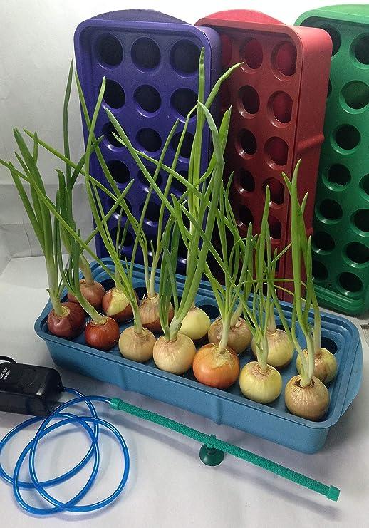 Sistema hidropónico para crecimiento de cebolla verde fresca ...