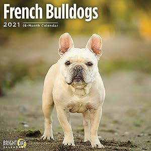 2021 French Bulldogs Wall Calendar by Bright Day, 12 x 12 Inch, Cute Dog Puppy