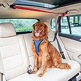 PetSafe Happy Ride Dog Zipline - Back Seat Leash, Great for Travel