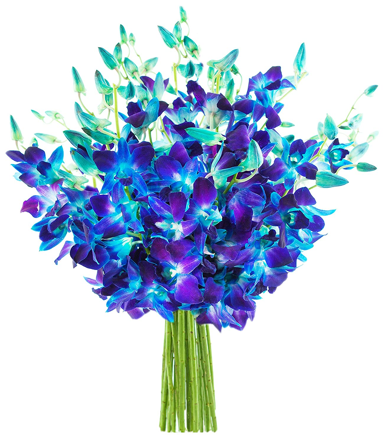 Amazon Kabloom Exotic Blue Sapphire Orchid Bouquet Of 20 Fresh
